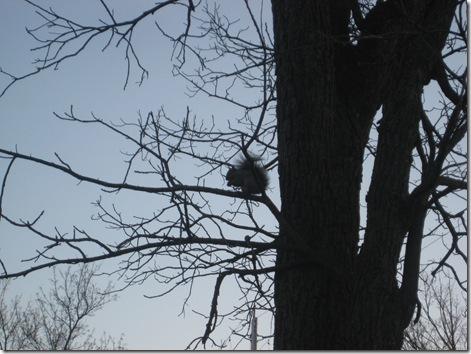 squirrels 028
