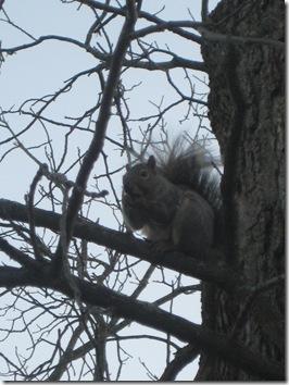 squirrels 032