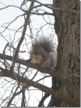 squirrels 033